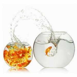 pez_pequeño_estanque_grande_emprendedores_Marca
