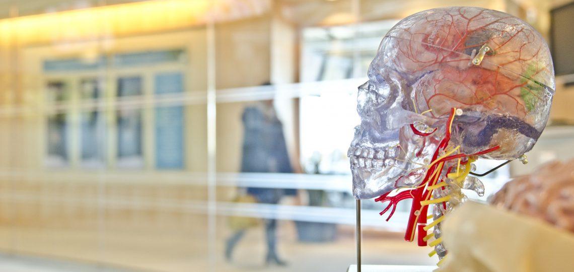 Neuroaprendizaje con Alto Impacto